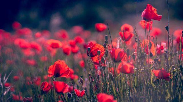 beautiful-flowers-blooming-blurred-background-1083895.jpg